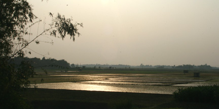 A beautiful sunset over a Bangladesh rice field.