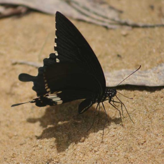 Can this butterfly see its shadow?