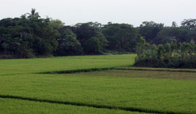 Beautiful Bangladesh!