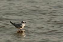 On Fisherman's Net Buoy