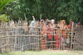 Bengali Watching From Other Side of Fence.
