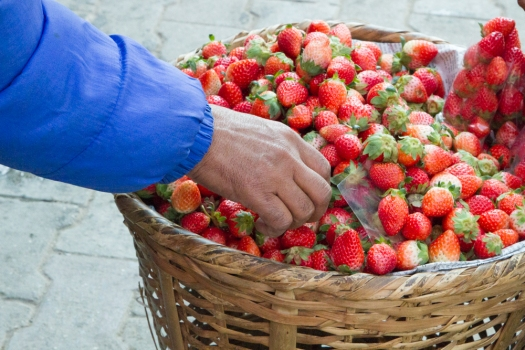 A large pile of strawberries brings back childhood memories of picking 100 quart of berries on my parent's strawberry patch!