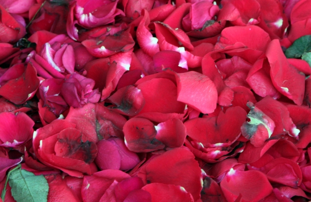 Rose Petals in bucket at the flower vendor's stand!