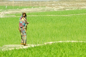 Beautiful Bangladesh Countryside!