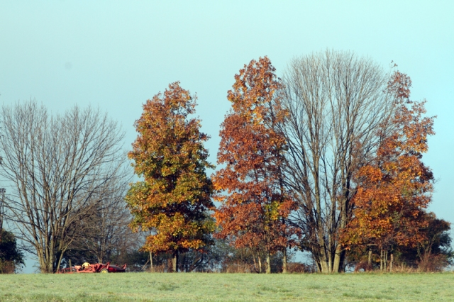 Some Trees Bare & Some with Colorful Leaves