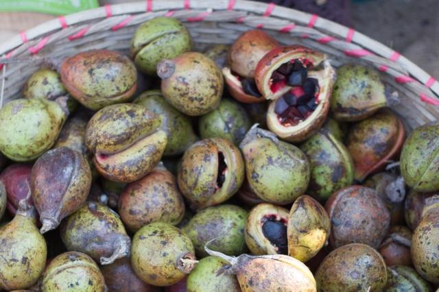 marlandphotos-blog-photograpy-small nuts-bangladesh-identify