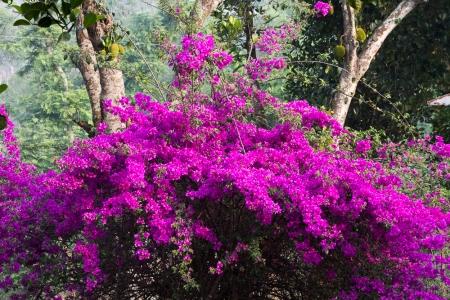 marlandphotos-blog-photography-flowers-purple-SriMongol