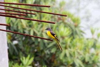 marlandphotos-blog-photography-birds-scarletminivet