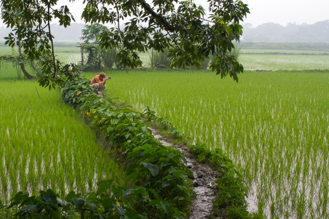 Marlandphotos-blog-photography-bangladesh-Rice-Paddy-BoilorVillage