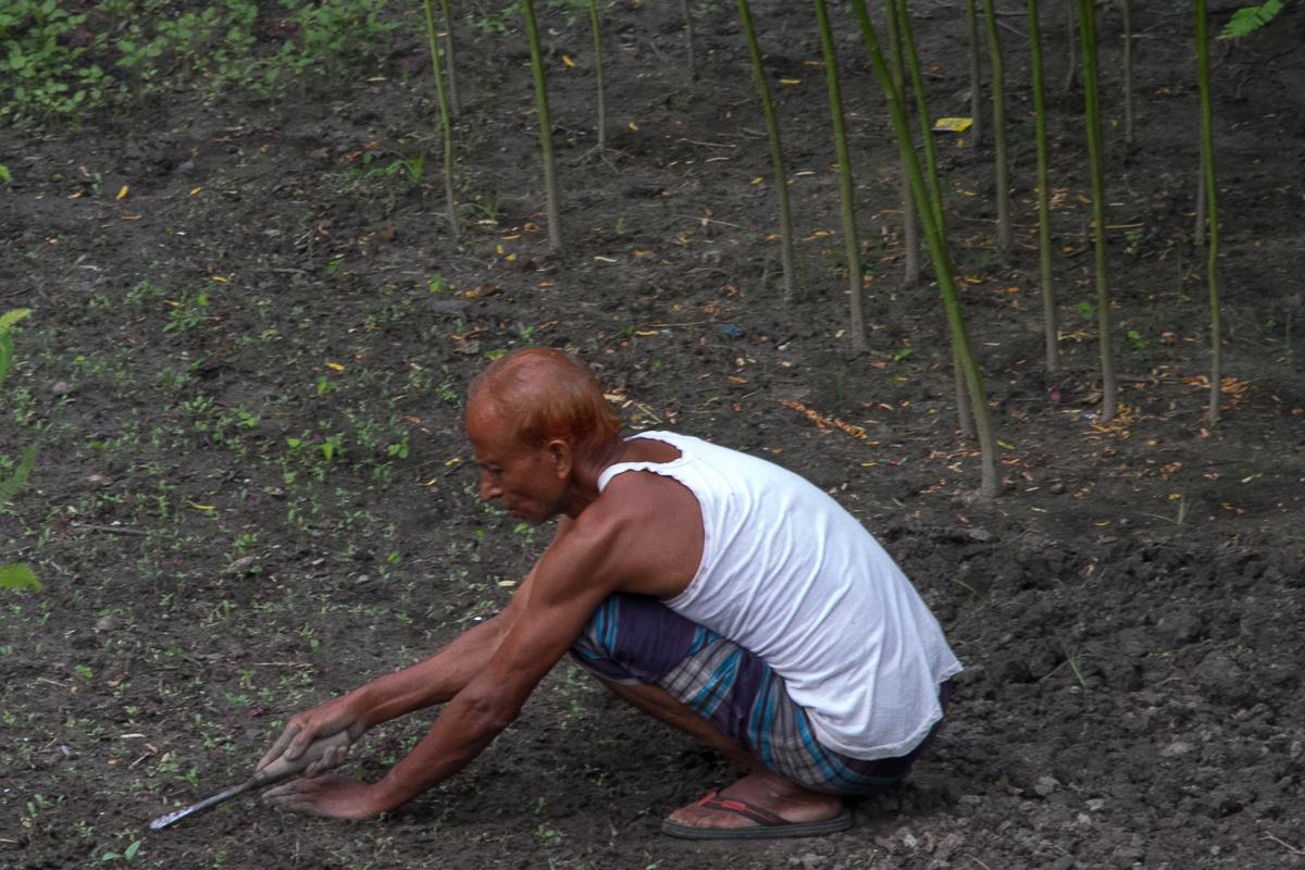 marlandphotos-blog-photography-bangladesh-Rajshahi-gardener
