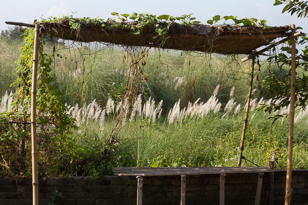 Kashbon as Seen Behind Arbor