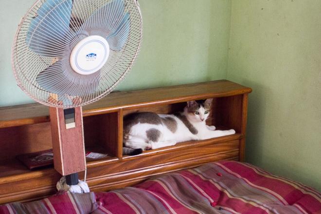 Nestled in The Headboard-Preparing Her Move