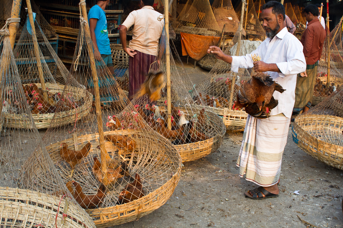 marlandphotos-blog-photography-bazaar-bangladesh-Chickens