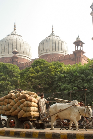 marlandphotos-blog-photography-travel-india-juma-mosque-delhi