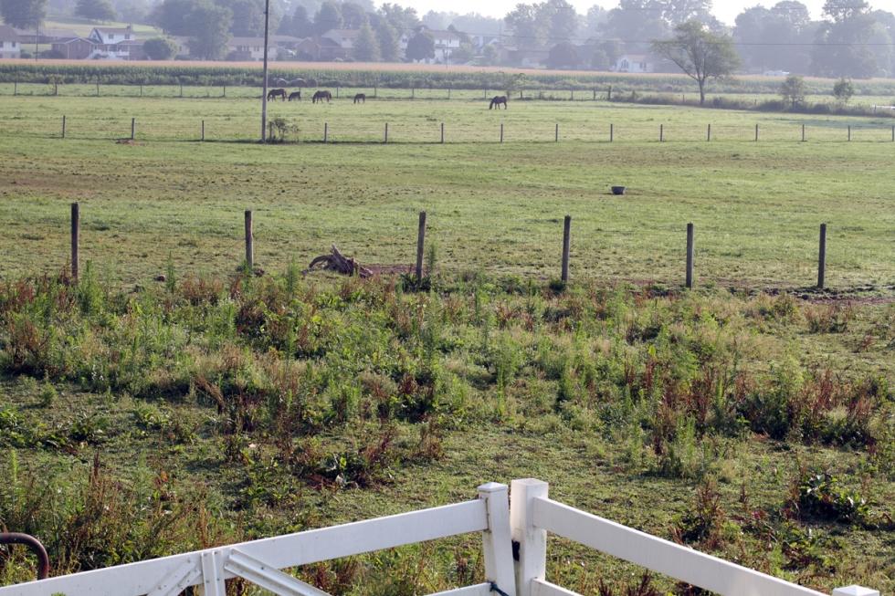 Lovely Sugarcreek Fields