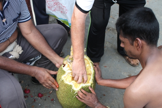 Reaching for a bulb of Jack Fruit
