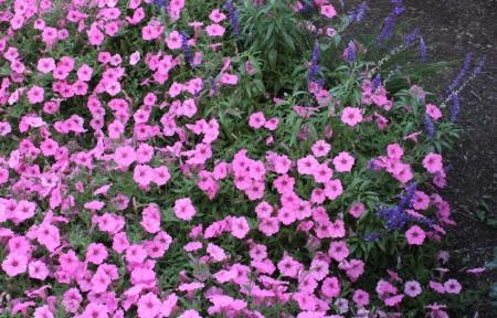 Pink and Blue Hues