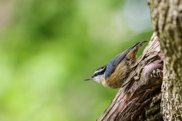 Magee Marsh, Crane Creek, BWIAB, Ohio, Birding